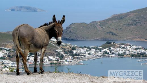 a mule on Patmos