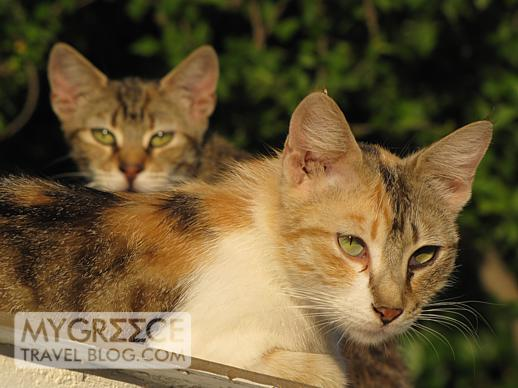 Two cats near Gagou beach