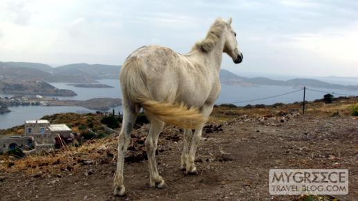 a horse on a hillside near Chora on Patmos