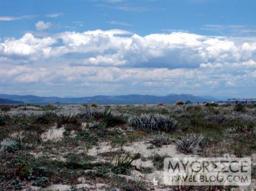 dunes near the beach at Tigaki on Kos