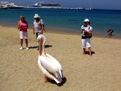 the famous Mykonos pelican