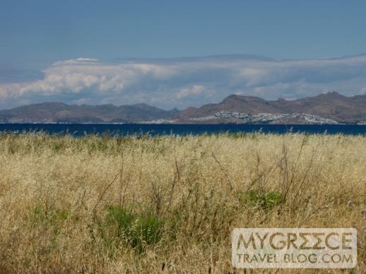 tall grasses near the coast on the way to Tigaki