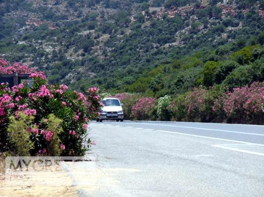 flowering plants along the highway in Crete