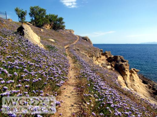 wildflowers on Mykonos coastal path