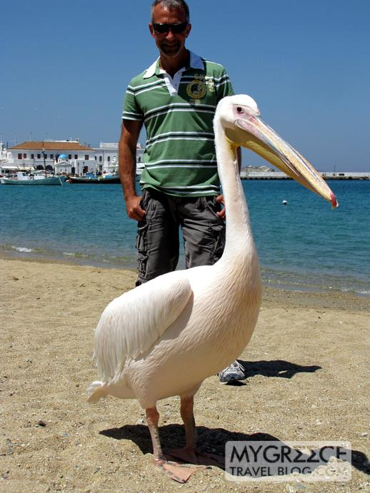Donny and a pelican in Mykonos