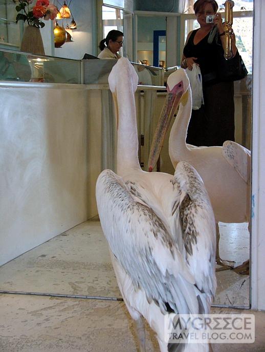 pelican in a Mykonos jewellery store