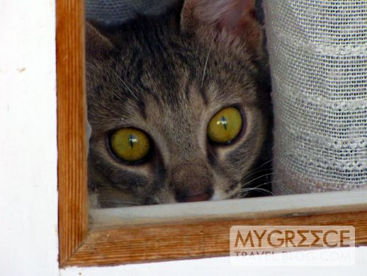 kitten in a window in Egali on Amorgos