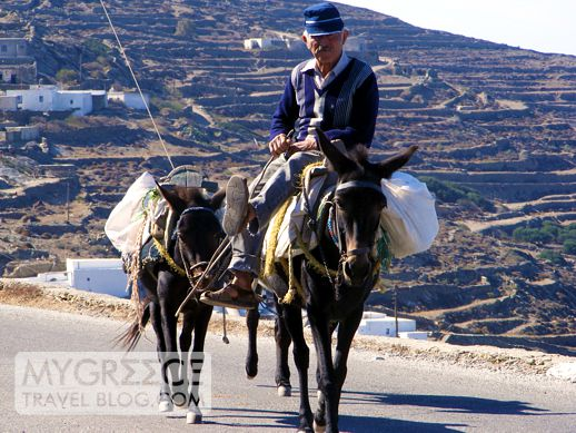 Man and donkeys on road in Folegandros