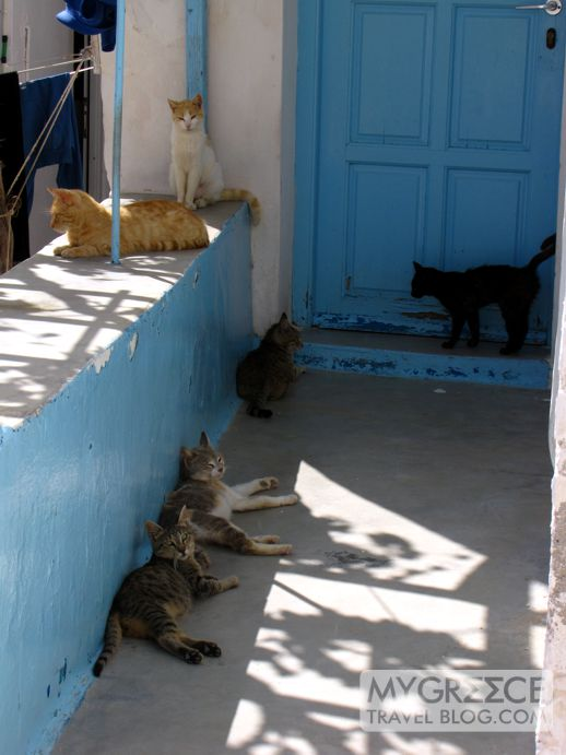 six cats in Chora on Ios