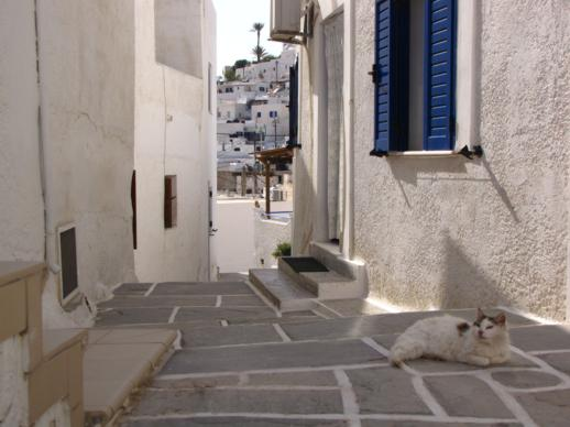 a cat in Chora on Ios