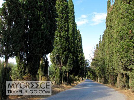 Road to Asklepieion on Kos