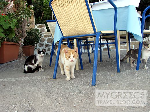 Stamatis taverna Grikos Bay Patmos