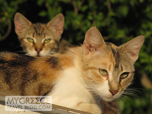 cats on Samos island