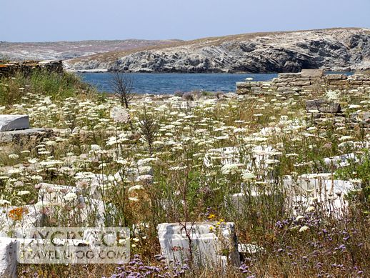 wildflowers and ruins on Delos island