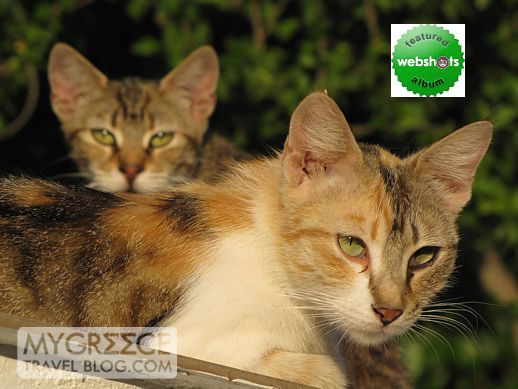 cats in Samos Greece