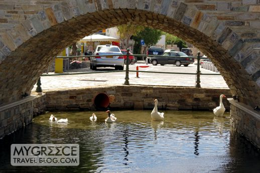 geese at Noussa on Paros