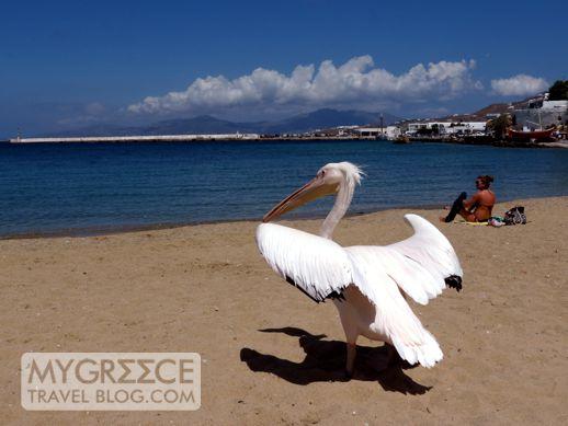 Agia Anna beach at Mykonos Town