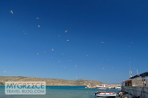 seagulls above Varkiza Bay in Attica