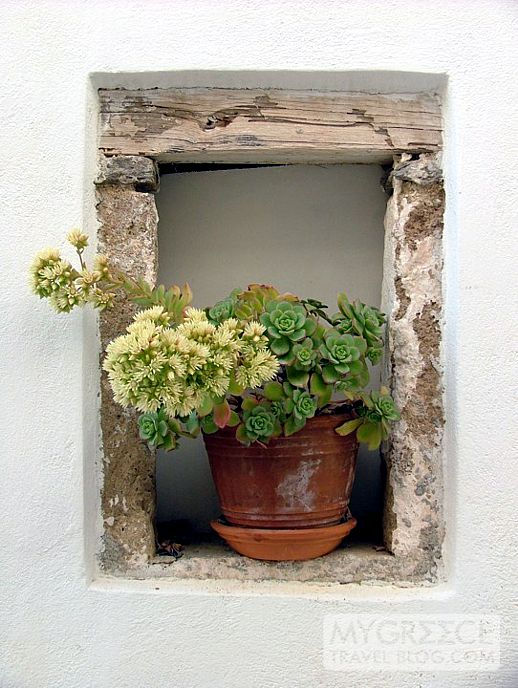 plant on a windowsill in Naxos Town