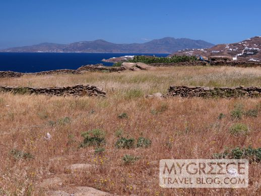 fields in the Tagoo district of Mykonos