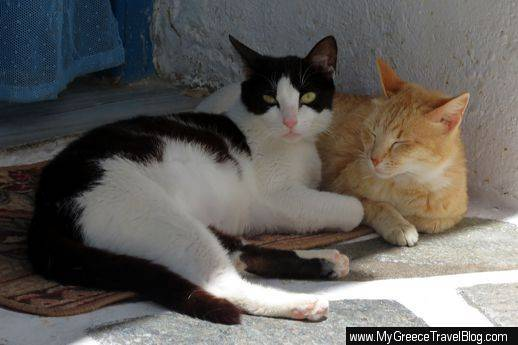 Naoussa cats