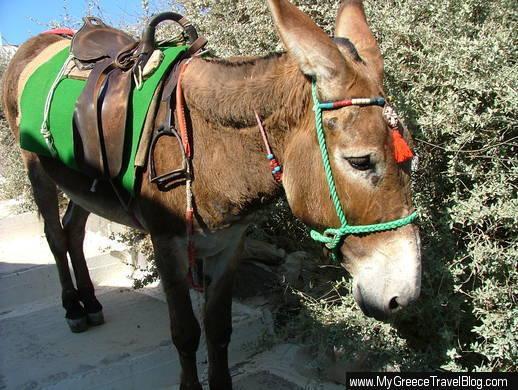 donkey in Santorini