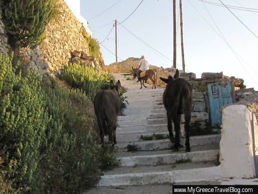 donkeys on Amorgos