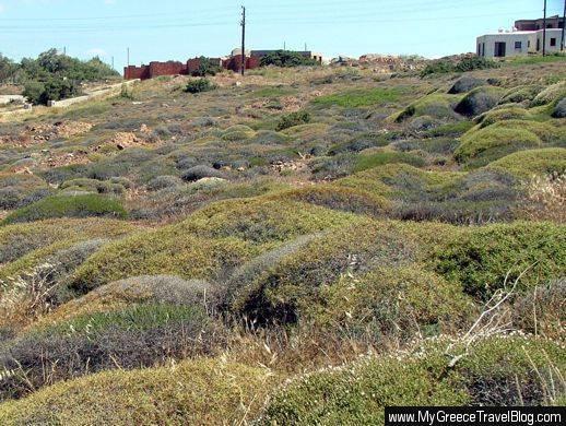Stelida hillside