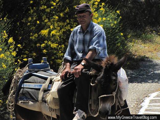 donkey on Amorgos