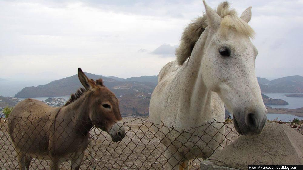 donkey and horse on Patmos