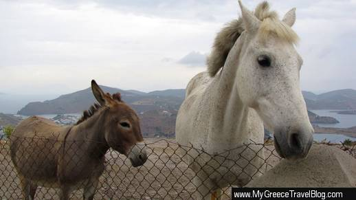 donkey and horse on Patmos