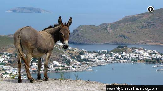 a donkey on a hillside overlooking the Skala, the port town on Patmos