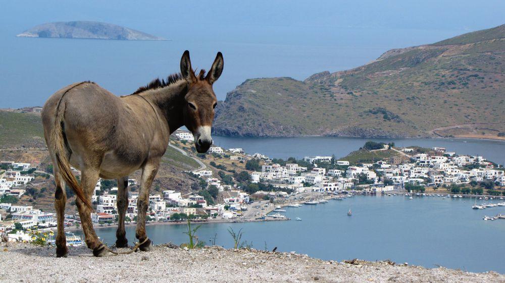 donkey on Patmos