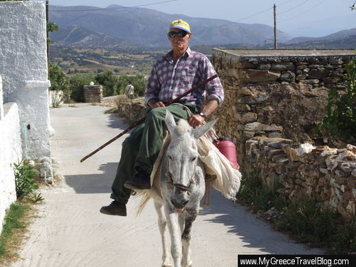 donkey on Naxos