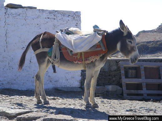 donkey on Folegandros