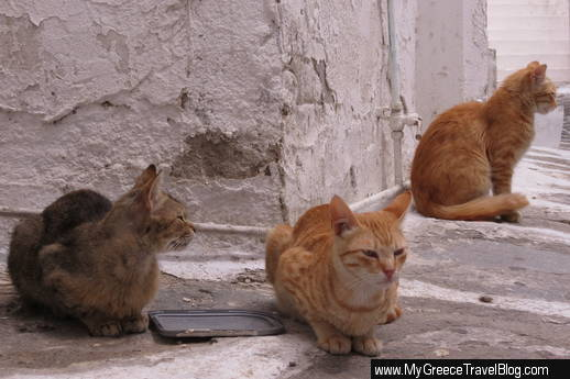 Mykonos cats