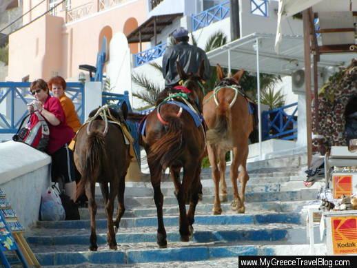 Santorini donkeys