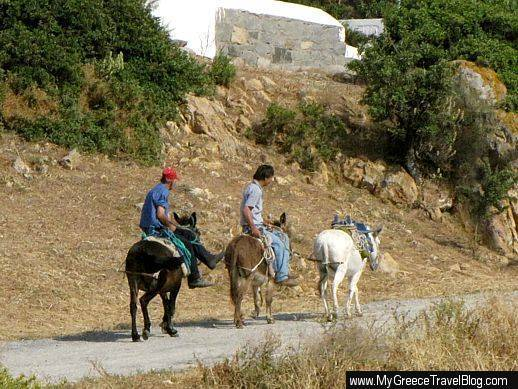 donkeys on Patmos