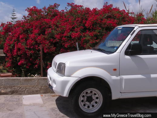 bougainvillea in Naoussa