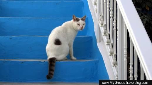 a cat on Ios island