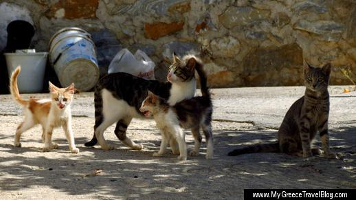 cats and kittens in Filoti