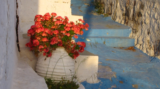 pot of geraniums on Milos