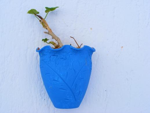 geranium in a wall pot on Milos
