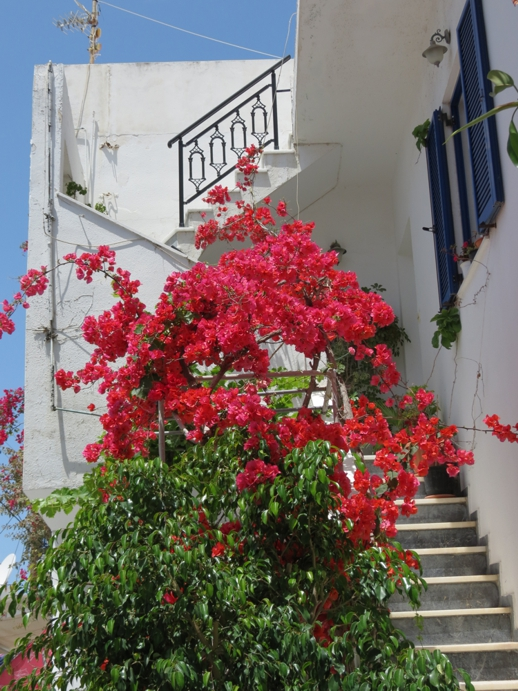 bougainvillea in Naxos Town