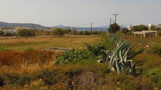 a field on Naxos