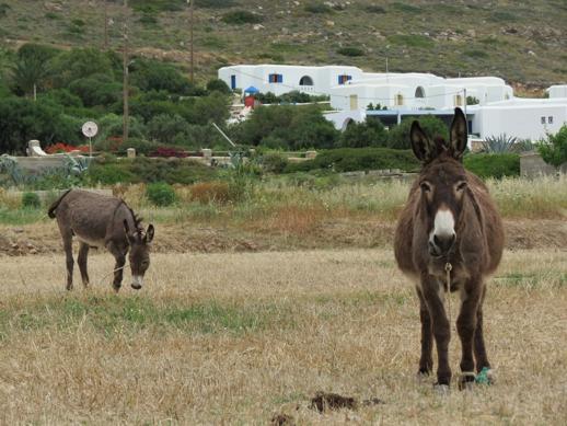 mules on Naxos