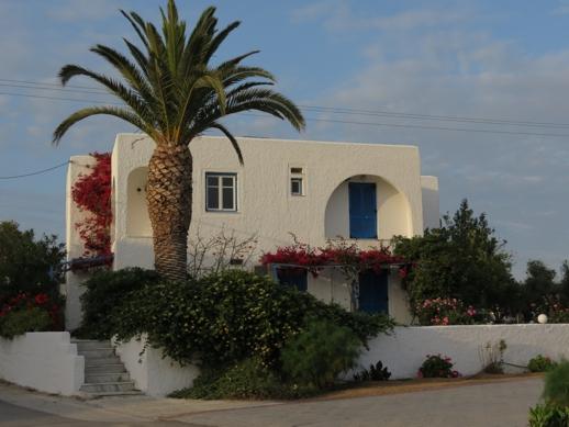 palm tree on Naxos