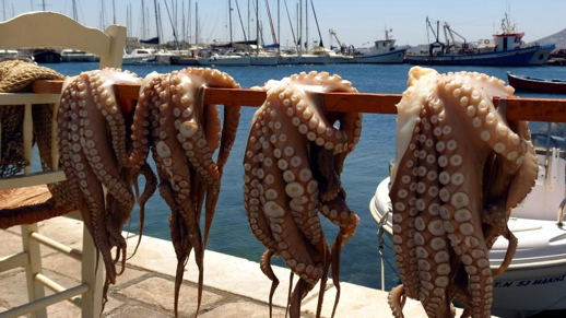 octopus hanging on a line