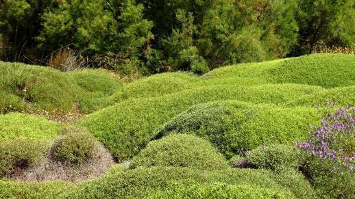 wild herbs on Naxos