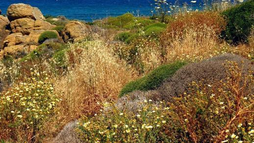 west coast of Naxos